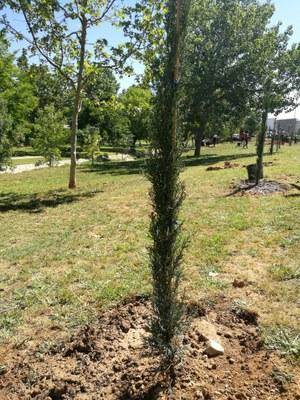 Plantada arbres Agramunt