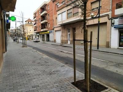 Plantat l'arbrat de l'Avinguda Jaume Mestres