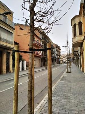 Arbrat Avda. Jaume Mestres